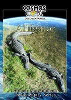 Alligator - Travel Video.