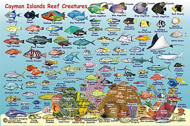 Cayman Islands Mini Map and Reef Creatures Guide Card, West Indies.