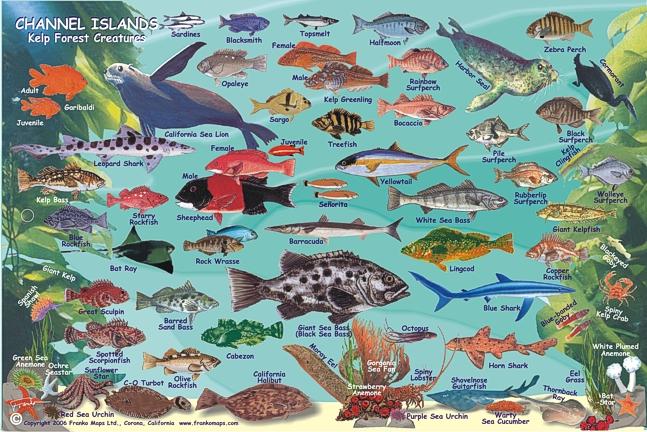 Channel Islands Mini Map & Kelp Forest Creatures Map, California, America.