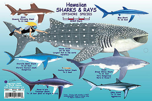 Hawaiian Shark and Rays Creatures Guide, America.