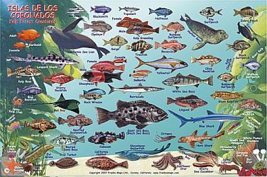 """Isles De Los Coronados """"Coronado Islands"""" Dive, Road and Recreation Map, California, America."""