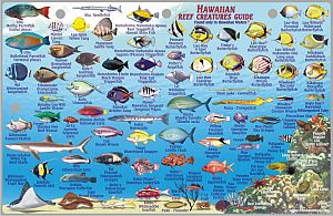 """Lanai Creatures Guide Road and Tourist Map, America. Size 6""""x9"""". Franko maps edition. Laminated."""
