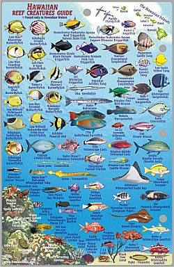 Maui Reef Creatures Guide, Road and Recreation Map, Hawaii, America.