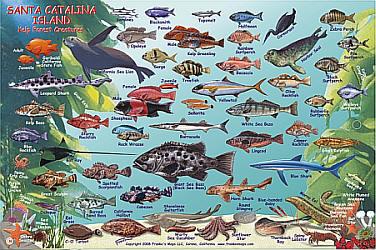 Santa Catalina Island Fish Card Road and Recreation Map, California, America.