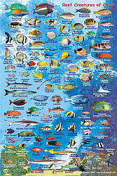 Truk Lagoon (Chuuk) Reef Creatures Guide, Road and Recreation Map.