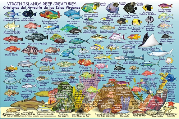 Virgin Islands Creatures Guide Road and Recreation Map, America.