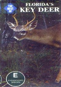 Florida's Key Deer - Travel Video.