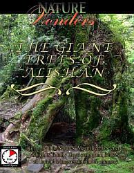 The Giant Tries of Alishan Taiwan - DVD.